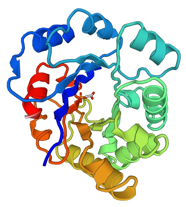 Cartoon view of a TIM barrel forming protein