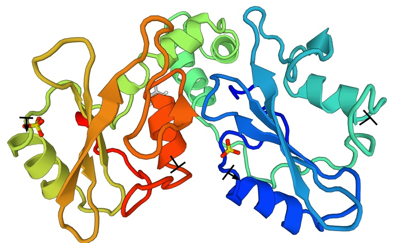 Cartoon view of Tyrosine-protein kinase ZAP-70