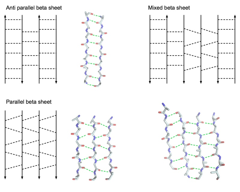 Abstract representation of different beta sheets and snippets of real proteins representing it.